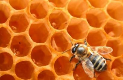 Miel de abeja, un antibiótico natural para la piel