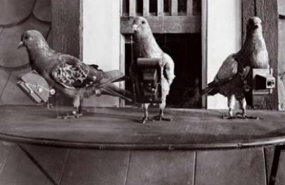 Las palomas fotógrafas del boticario Julius Neubronner