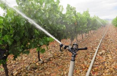 Estudia investigador circulación del agua en plantas en pos de mejorar sistemas de riego
