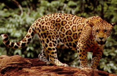 WWF advierte sobre pérdida de vida silvestre en Latinoamérica