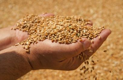 Logra empresa mexicana eliminar plagas de grano almacenado con ozono y abatir costos