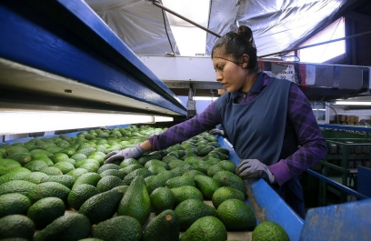 Con inteligencia artificial IPN detecta anomalías en aguacate, mango y tortilla