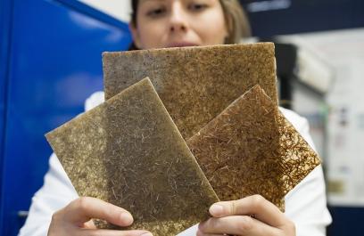 Crean científicas bioplástico desde nanotecnología forestal