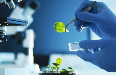 Las áreas de Ciencia y Tecnología de los estados se oponen a la extinción de los fondos mixtos que plantean Conacyt y Morena