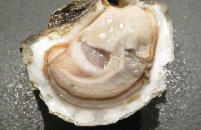 Las ostras producen materiales espumosos con una técnica parecida a la impresión 3D